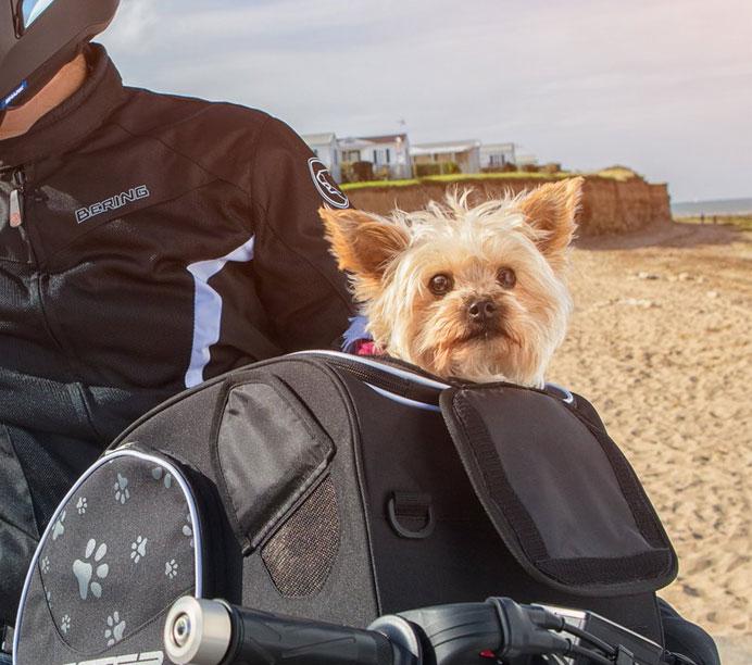 Quelle sacoche pour transporter un chien ou un chat ?